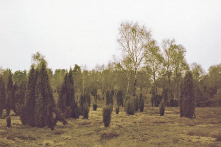 Lüneburger Heide bei Celle April 1982