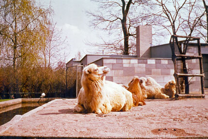 im Zoo April 1976