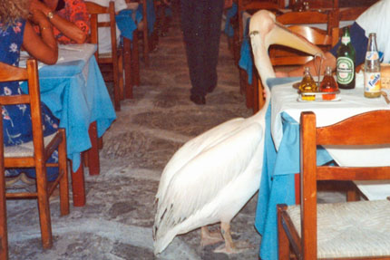 der Pelikan in Mykonos Stadt September 1997