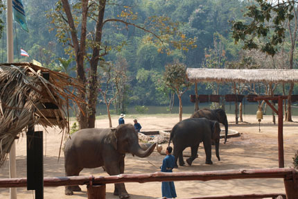 die Show im Thai Elephant Conservation Center Februar 2016