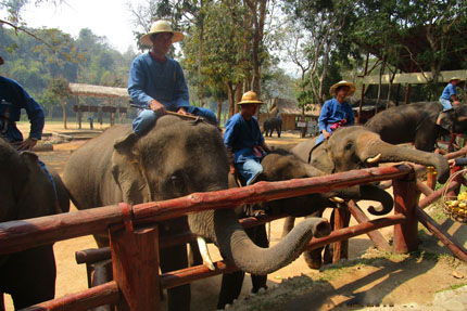 Kunstwerke im Thai Elephant Conservation Center Februar 2016
