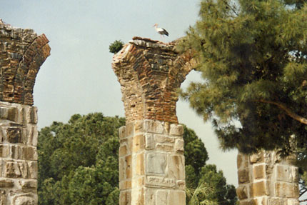 Storch irgendwo in Selcuk Mai 1988